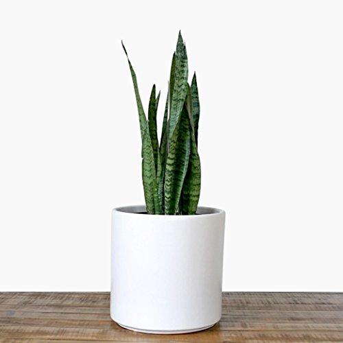 Large White Planter Plant Pot Indoor Planter Ceramic