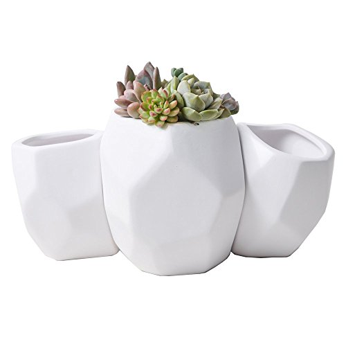 Irregular Medium E For Diy Herbs Succulents Or Cactus Nursery Mid Century Artistic Porcelain Container To Storage Candle Air Plant Potpourri And