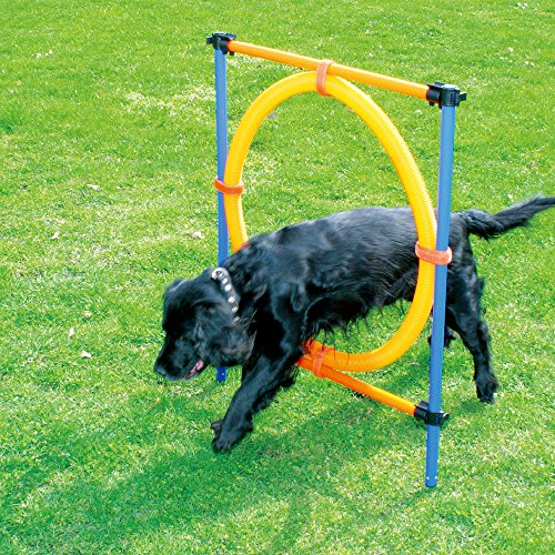 Blue/Yellow - PawHut 4 Obstacle Backyard Competitive Dog ...